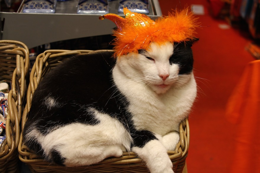 cat with crown