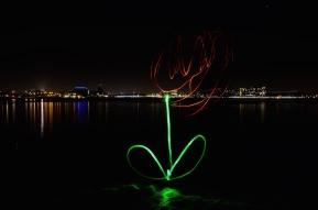 light tulip