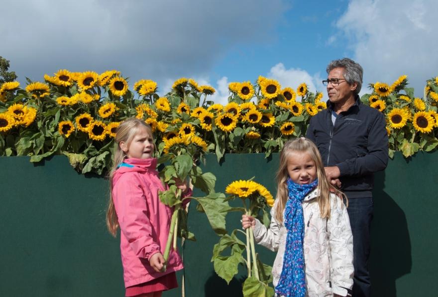 Sunflower Lybarinth, van Gogh museum