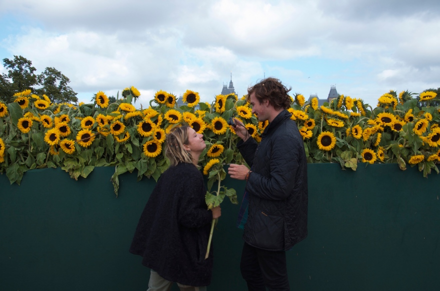 Lovebirds with sunflowers