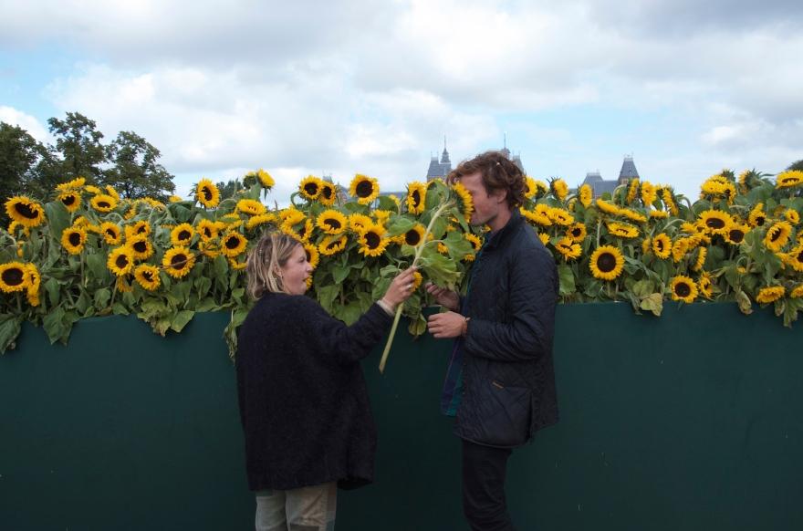 Sunflower attack in Sunflower Lybarinth, van Gogh museum