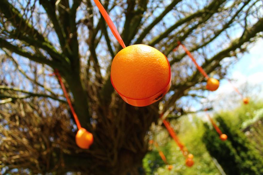 oranje dutchness