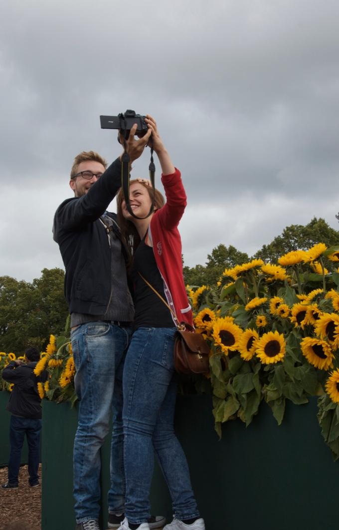 Lovebirds in Sunflower Lybarinth, van Gogh museum
