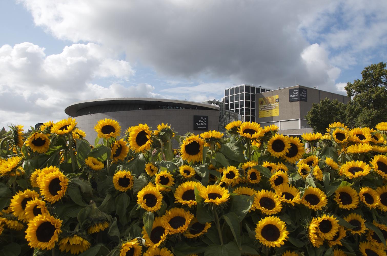 Sunflower Lybarinth Van Gogh Museum