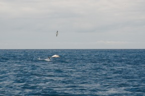 soul mate dolphin and seagull