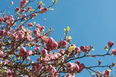 oxford spring color