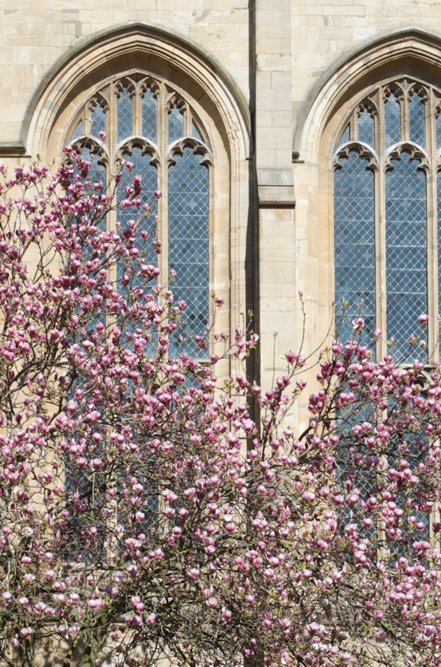 st marys church blossom