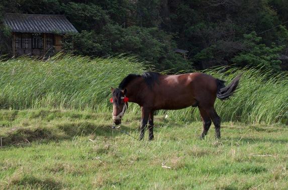 horse puzhehei