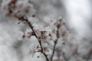 spring blossom amsterdam